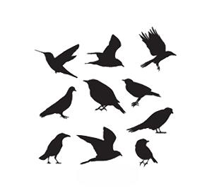 best bird control company dubai