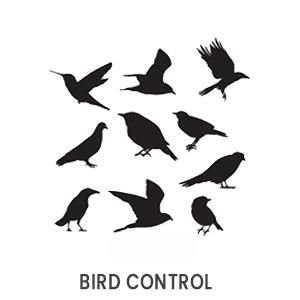 Bird contol