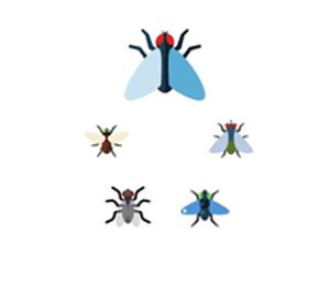 bes fly control company dubai