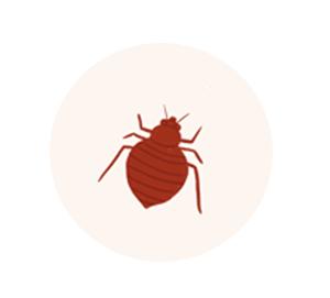 Bedbug Control dubai