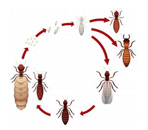termite control dubai
