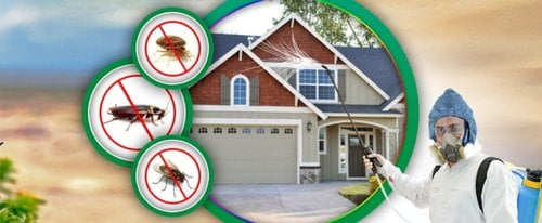 residential pest control in Dubai