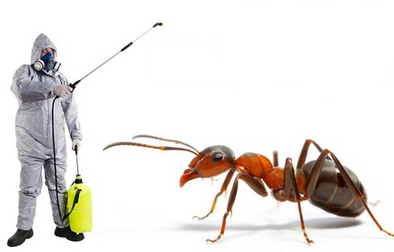 best ant control company in Dubai