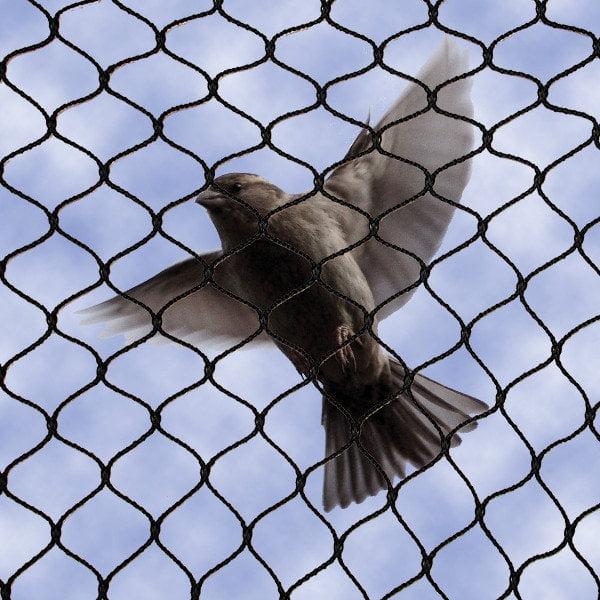 Bird netting by news tar pest control