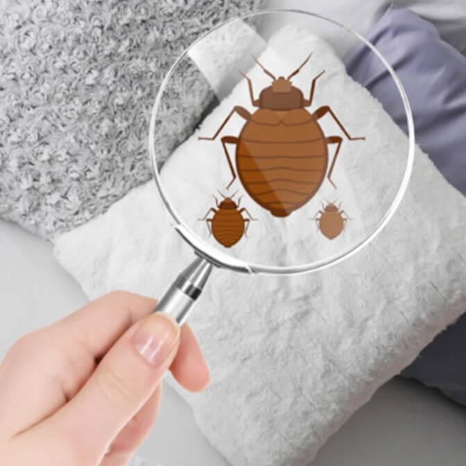 bedbug exterminator Dubai