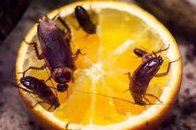 Best pest control in Abu Dhabi